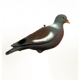 FORME APPELANT PIGEON RAMIER PALOMBE